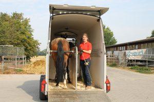 verladetraining pferd