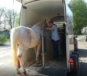 Hängertraining Pferd